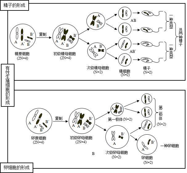 【生物】高三生物第二轮复习知识结构:生物的生殖与发育/生物与环境