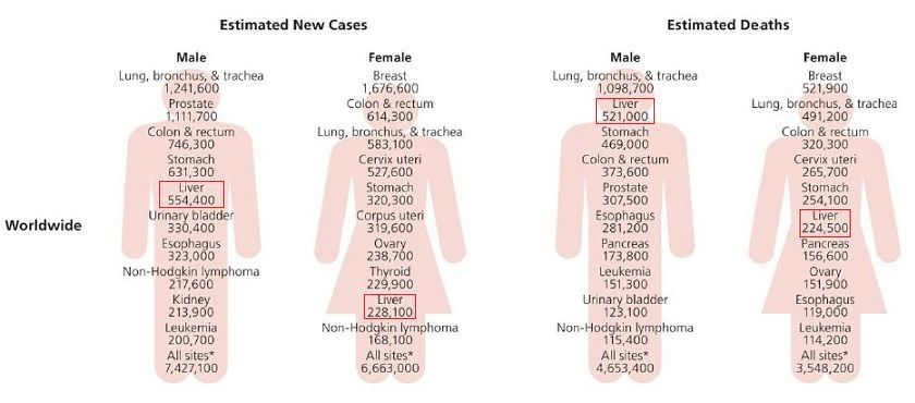 肝癌检测的5大类肿瘤标志物,你都了解吗?