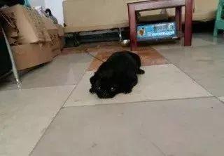 每天晚上出门遛狗,别人都以为在遛绳子!