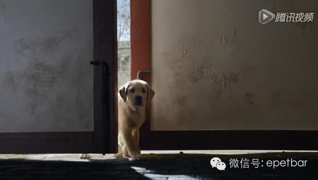告犬马情_犬马情看哭好多人,只有爱狗的人才懂