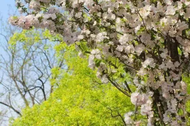 有一种春天,叫青岛