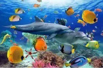 蘇州海洋館還展示了長江,太湖的淡水生物圖片
