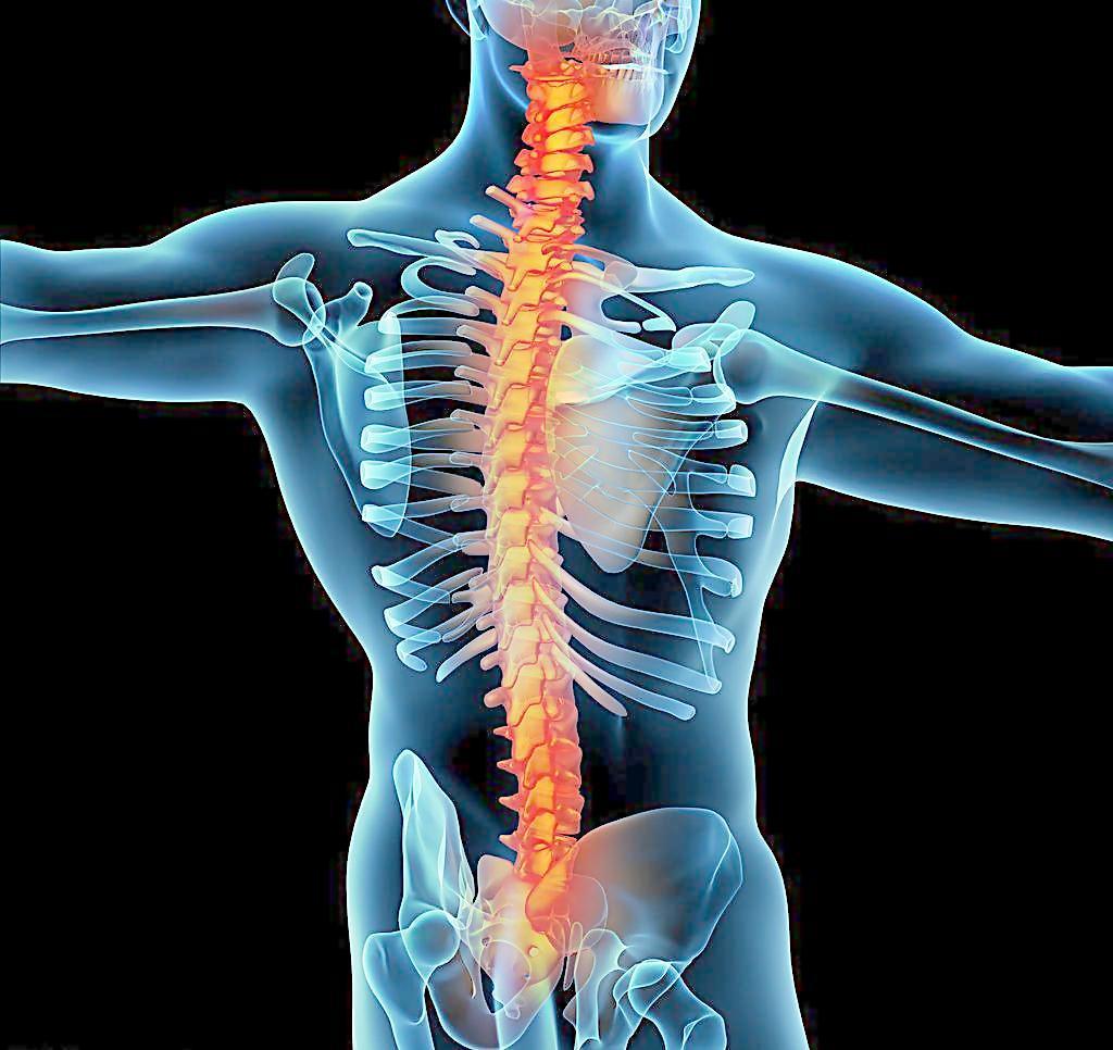 反射 脊椎