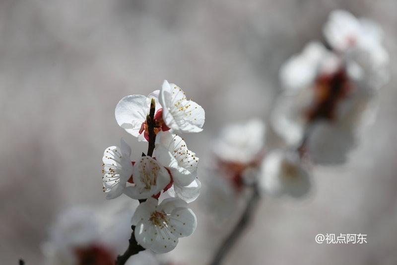 周至第二届十里花海旅游文化节开幕  引爆踏春赏花新热潮 - 视点阿东 - 视点阿东