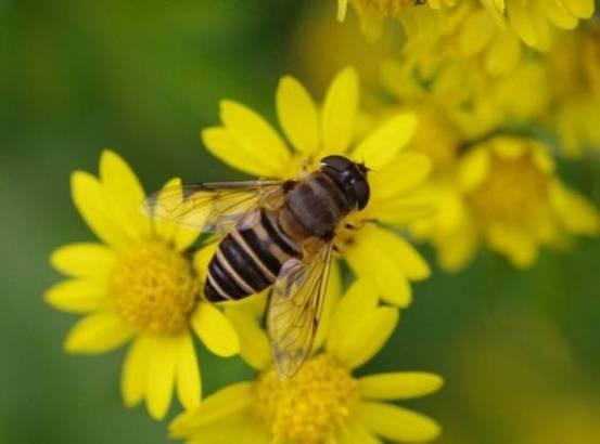 【亲子手工】12款勤劳的小蜜蜂,亲子课不可错过哦!图片