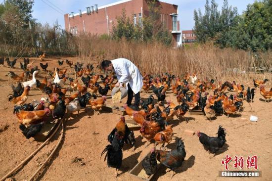 农业农村部:力争实现所有畜禽屠宰企业远程视频监控