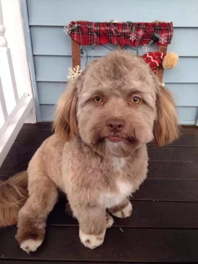 这只狗狗的长相,看到第一眼就惊呆了!