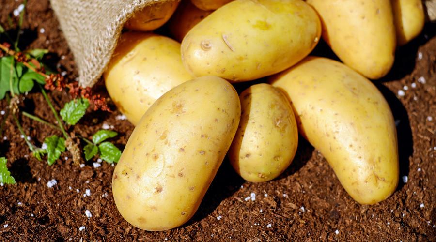 土豆也是主食吗?  马博士健康团问答
