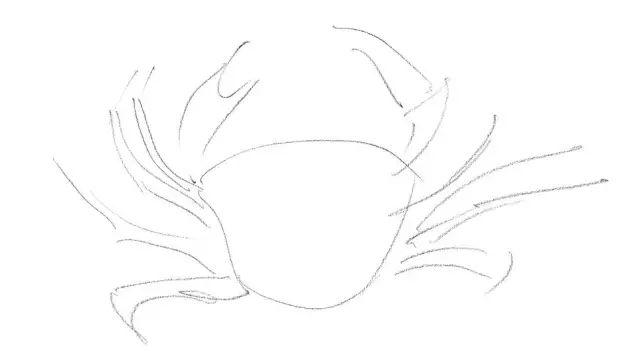 零基础素描小练习,教你画莺 鹰 狗 马 狮子 鲶鱼 螃蟹图片