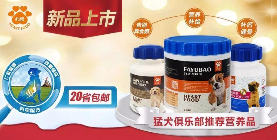 狗凶猛排行榜_全球五大最凶猛的狗排名,中国的一种狗公认排名第一
