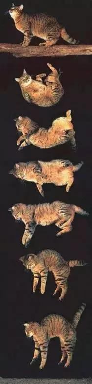 鸡蛋从高空坠落能砸死人 为什么猫却摔不死