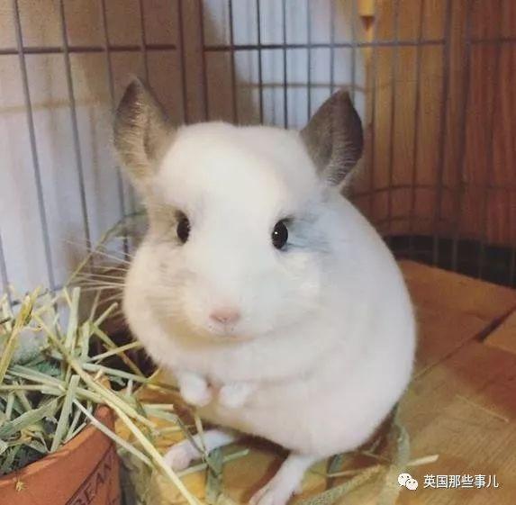 壁纸动物鹦鹉573_561红头太阳兔子可以养吗图片