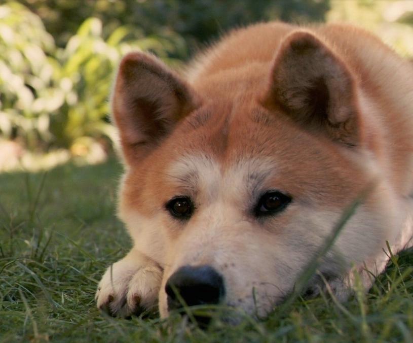 养宠物的坏处英语_为什么要养狗 告诉你养狗的十大好处