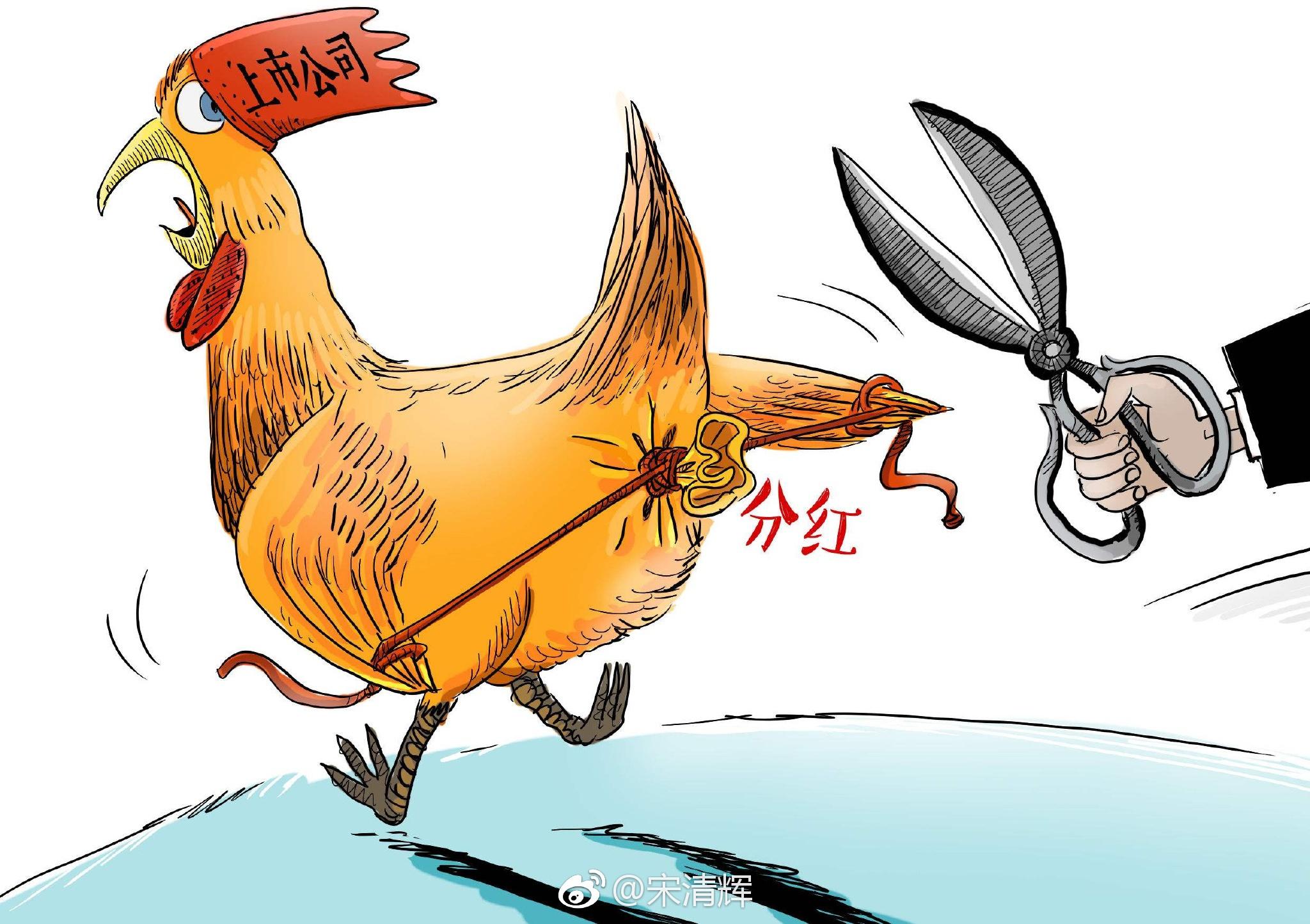 """宋清辉:碰到""""铁公鸡""""投资者应尽早远离"""
