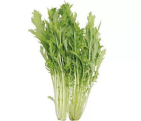 Lets Salad 健康的生活方式从认识沙拉开始!