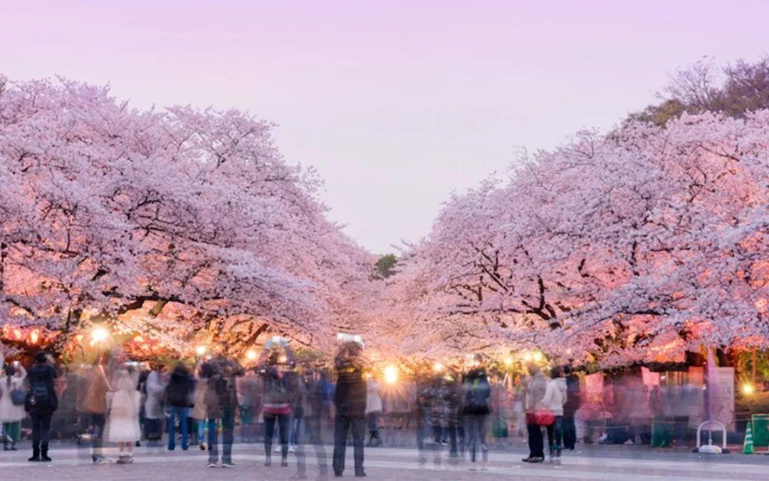 带上这份日本旅游指南,赴一场完美的樱花之旅 | 有用功