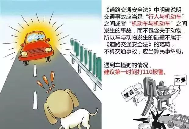 开车路上遇见小动物,到底是撞还是躲? 搜狐汽车 搜狐网