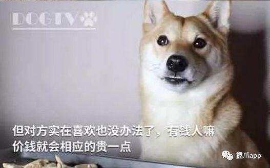 成人三级撸狗网_告诉你撸狗会所爆红的真相!