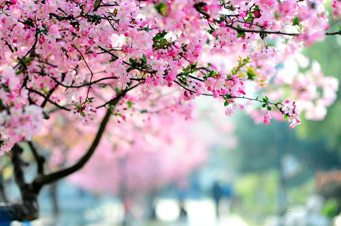 【作者专栏】周宝宏:春