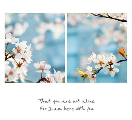带有樱花的头像