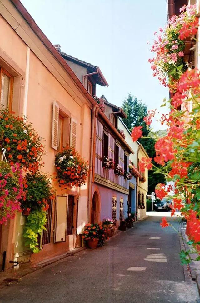 Rose【世上最美的鲜花小镇,胜似人间天堂!】(7839) - Rose - Rose Yang的博客