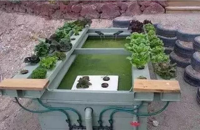 外国创意农业是这样玩的,美呆了!
