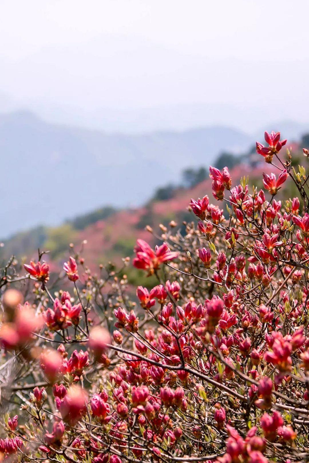 中国12个花海,开遍12个月份,一年四季有美景