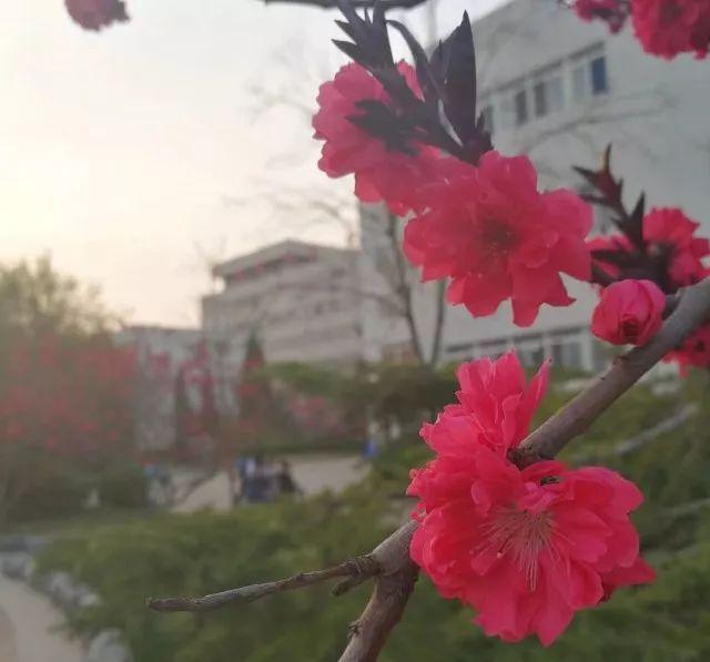 春天的花开,春天的风