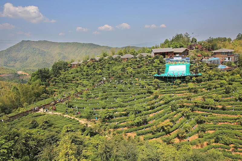 在采茶女们的带动下,上千名游客参与了采茶制茶,山间拾蛋,古法榨油,古图片