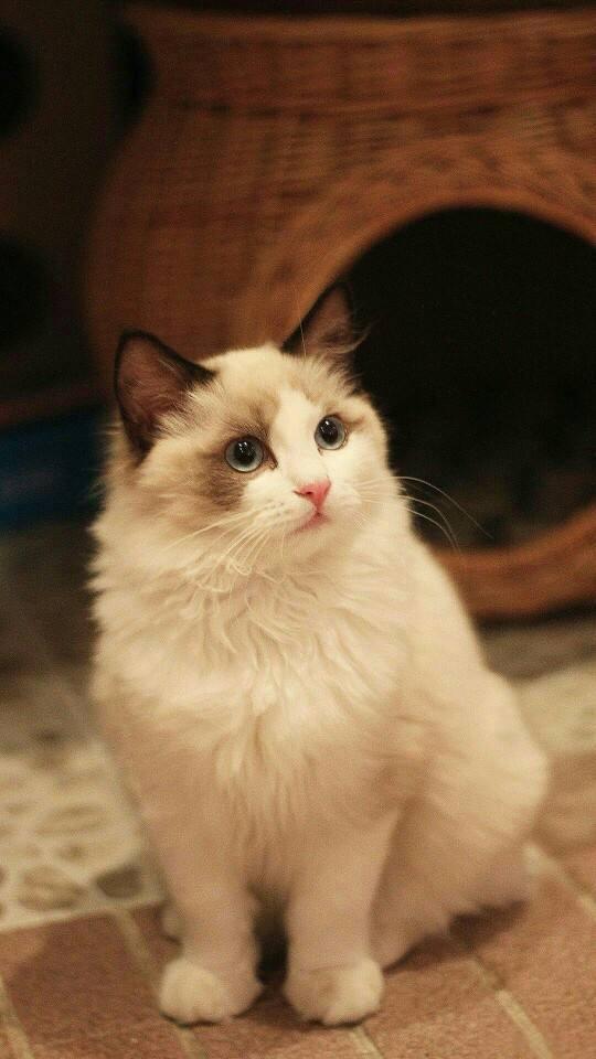 世界上最可爱的猫,萌化你的心!