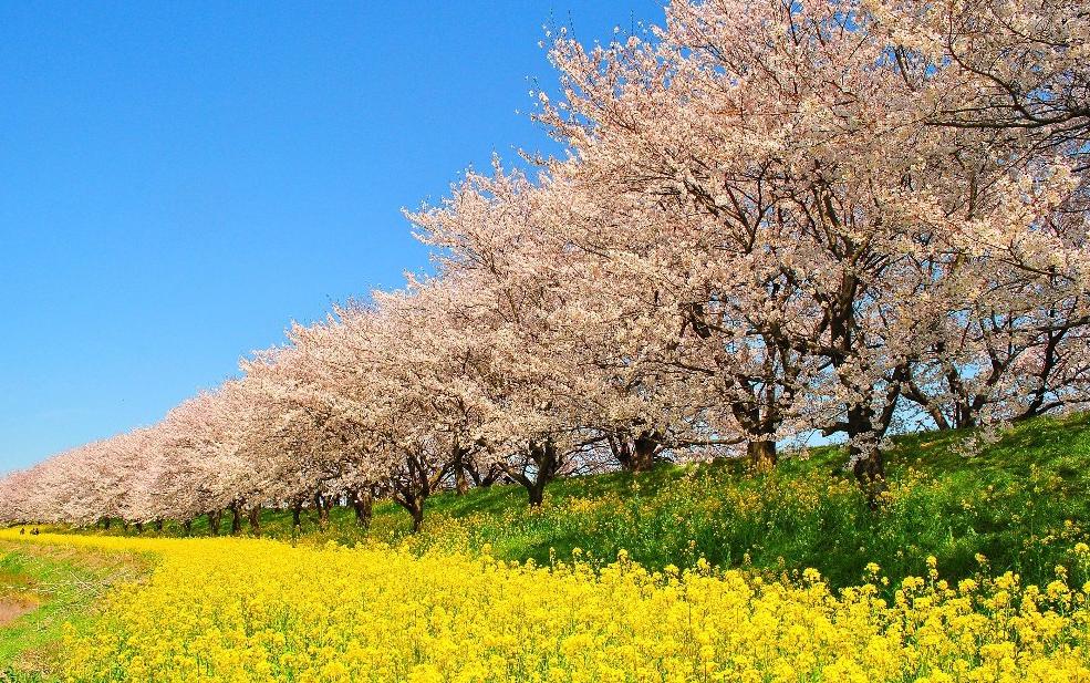春天是一个疾病季节!? 提高免疫力,是关键