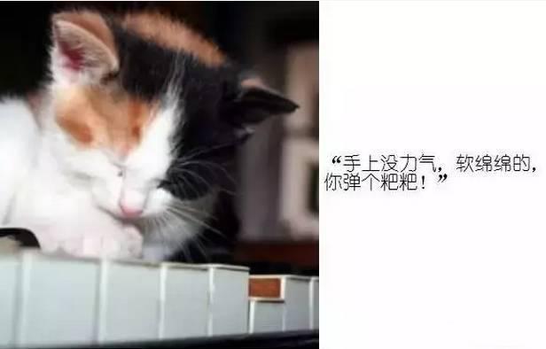 段子弹钢琴大笑的女孩:每个弹钢琴的人,都是段子手