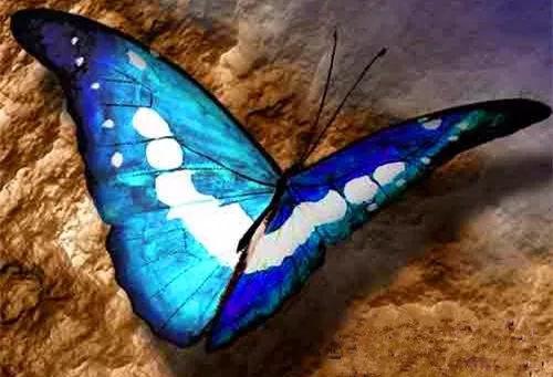 (蝶变)最诡异的蝴蝶:卡申夫鬼美人凤蝶!左翅似美女,右