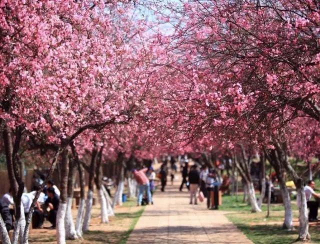 广州11个春游好去处 赏花 踏青 骑行 清明小长假来这就对了
