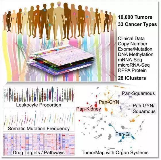 """人类癌症研究的""""谷歌地图:泛癌症图谱(Pan-Cancer Altas)问世!"""