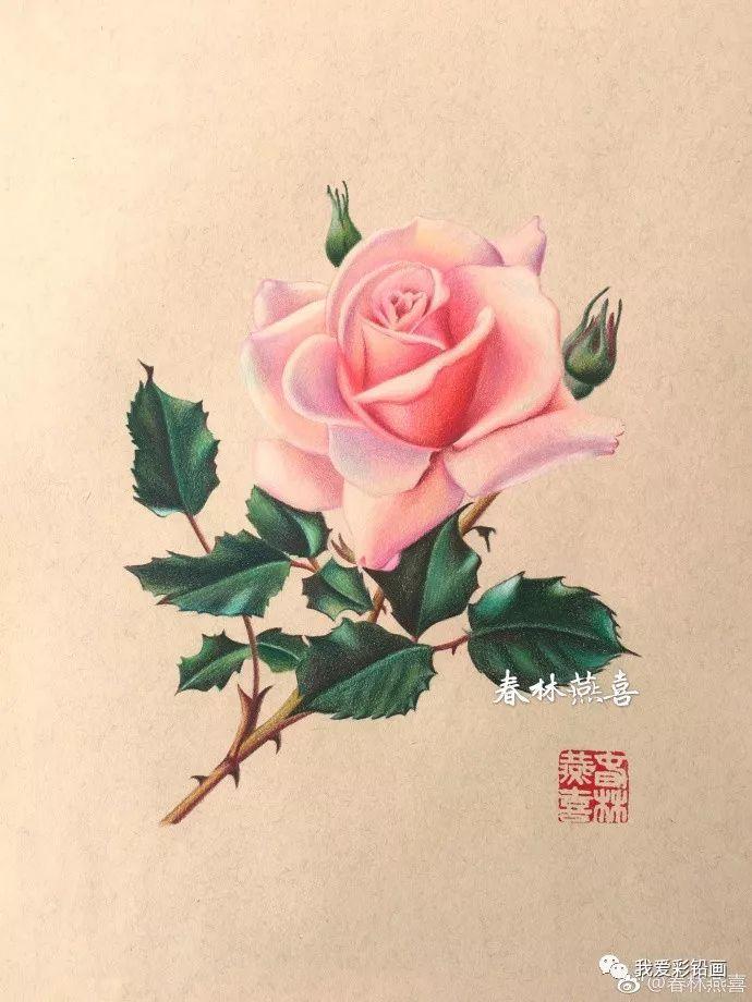 真美!复古的味道~彩铅手绘花卉过程