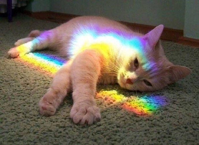 网友为减轻猫咪产后抑郁症,这样的方法还挺管用!