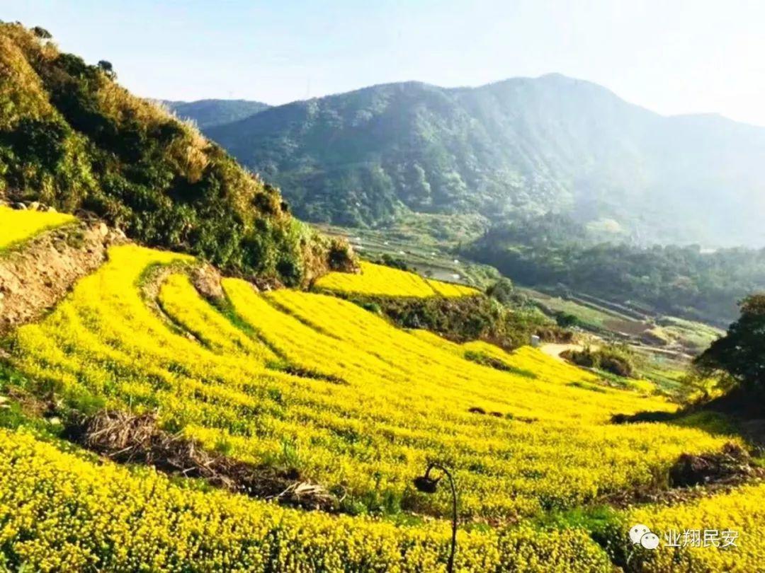 旅游 正文  当然就是踏青赏花啦 在咱同安的邻区翔安 一个美丽的地方