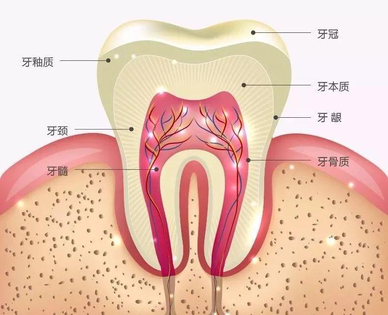 人体最坚硬的部分_脸肿跟 大姨妈 有关腹泻可能是 结肠过敏
