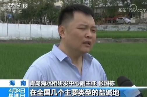 中国今年首次大范围试种海水稻