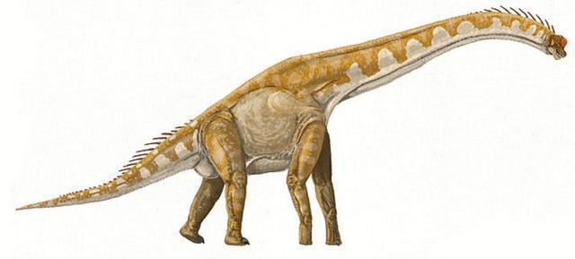 长颈巨龙(布氏腕龙)的想像图   长颈巨龙与人类的体型比较图 在过去数十年,布氏腕龙曾经被认为是世界上最高的恐龙,也是最重的恐龙;双腔龙也是种巨型恐龙,但化石相当稀少.