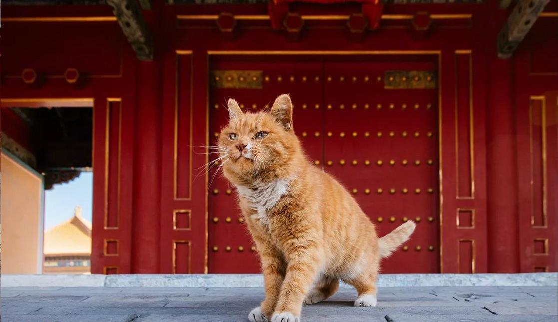 中国最会卖萌的猫咪都去故宫了!181只超美御猫,还会