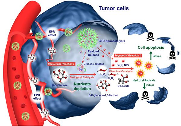 """中科院上海硅酸盐所提出""""纳米催化医学"""" 可低毒高效杀肿瘤"""