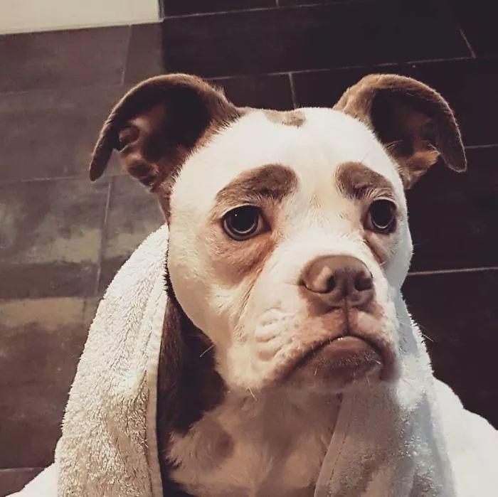 世界上最忧伤的狗_世界上最忧郁的狗狗