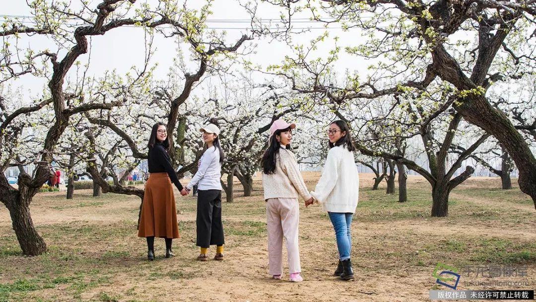 美翻了!北京最美的春景都在这里了——