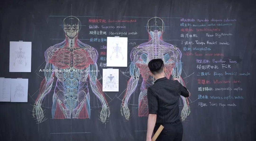 解剖图全手绘,一个被医生耽误的画家.