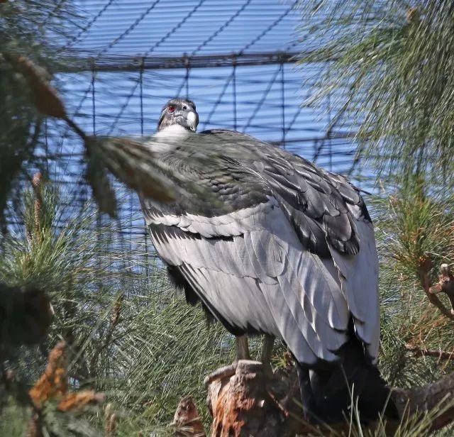 悦享 | 啥?世界上最长寿的鸟在匹兹堡生了孩子