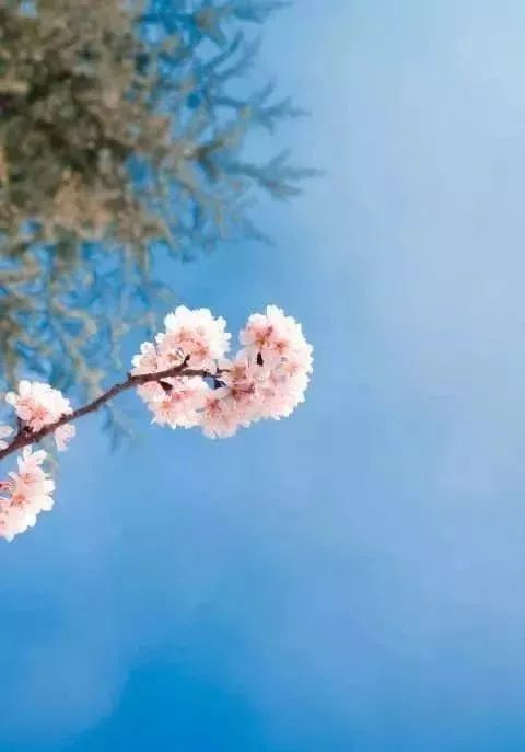 当春天的第一缕阳光撒在地平线上, 那躲藏了一整个冬季的 小嫩芽就