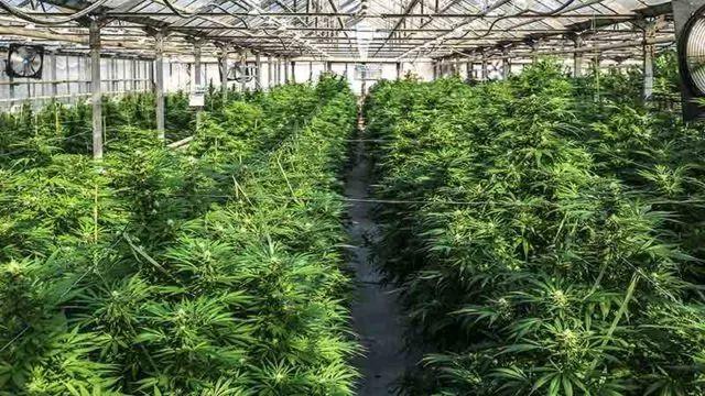 医用大麻公司MGC获马耳他政府建厂合约