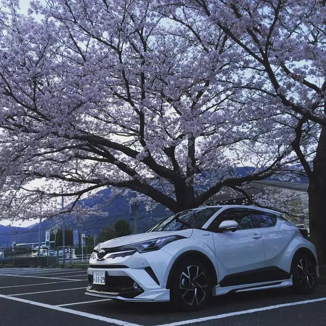 丰田这款网红车,比缤智好看N倍,日本上市一年销量已突破10万台